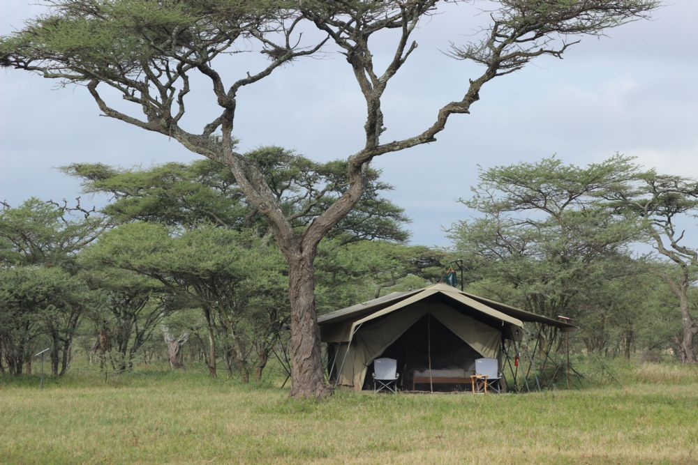Ndutu Wilderness Camp tent under trees